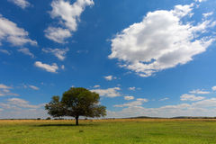 Lone tree under the clouds. Free State, South Africa Stock Images