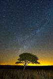 Lone Tree under the milkyway. Ezemvelo, South Africa Stock Photography