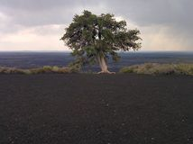 Lone tree. It was the only tree on the top of this mountain Stock Photos