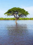 Lone tree in the water. A tree in the water of Tonle Sap Lake in Cambodia during flood season Stock Photo