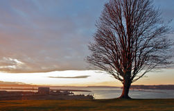 Lone Tree on a Waterfront Cliff. Lone bare tree in winter on a cliff overlooking Puget Sound as the sun is beginning to set Royalty Free Stock Photography