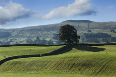 Lone tree, Wensleydale Stock Photos