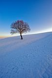 Lone tree in winter. A lone tree stands in a snow-covered area Stock Images