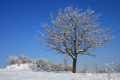 Lone tree in winter stock photos