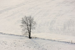 Lone tree in winter. A lone tree along a fence line in winter Stock Photos