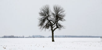 Lone tree in winter. Lone tree on a large tract of land in winter snow Royalty Free Stock Photo