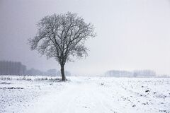 Lone tree in winter landscape Stock Image