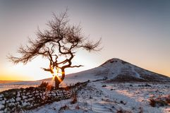 Lone Tree - Winter. Lone Tree in a winter landscape - Roseberry Topping - North Yorkshire stock photo