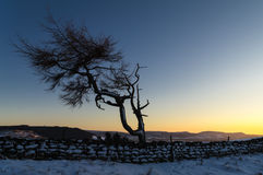 Lone Tree - Winter Royalty Free Stock Images