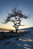 Lone Tree - Winter Stock Images