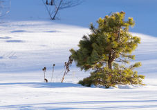 Lone tree winter Stock Images