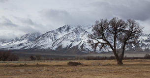 Lone tree in winter mountains Stock Photos
