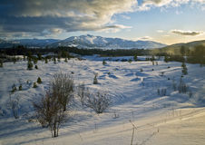 Lone tree on winters day. A winter landscape in Norway Stock Photography