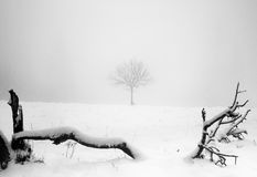 Lone tree in winters snow. Winter snow in a field with one lone tree Stock Images