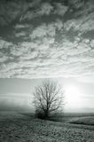 Lone tree in Wintry landscape. Black and white scenic view of lone tree in snowy Winter landscape under cloudscape Stock Image