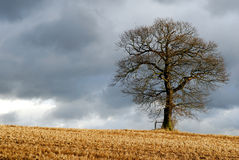 Lone tree in wintry landscape Royalty Free Stock Images