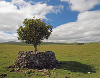 A lone tree on the Yorkshire Dales stock photo