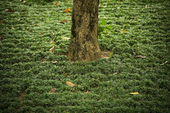 A lone trunk of a tree amongst grass royalty free stock image