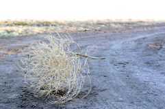 Tumbleweed on a Country Road. A lone tumbleweed rolling across a dirt road in the country Royalty Free Stock Photos