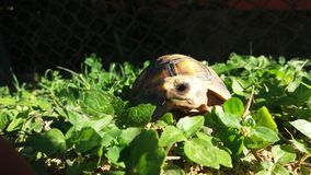The lone turtle. The turtle at his thought royalty free stock image