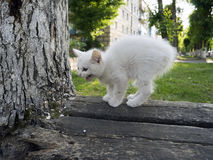 Lone white homeless kitten on the street. Stock Photos