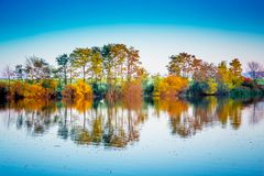 A lone white swan floats along a river that reflects multicolored autumn trees. Autumn landscape with the river_. A lone white swan floats along a river that stock photography
