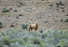 Lone wild horse Stock Photo