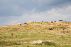 Lone Wild Horse Royalty Free Stock Photos