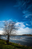 Lone willow in fenland Royalty Free Stock Photography