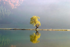 Lone willow tree Stock Photo