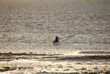 Lone windsurfer at low tide Stock Photo