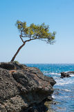Lone windswept tree at edge of coast. Seen in southern Turkey Royalty Free Stock Images