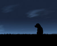 Lone Wolf. A lone pup waits for its owner at dusk stock illustration