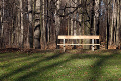 Lone wooden bench Stock Photo