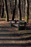 Lone wooden bench Royalty Free Stock Image