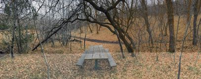 Lone wooden Picnic Table in late Fall panorama forest through trees on the Yellow Fork and Rose Canyon Trails in Oquirrh Mountains Royalty Free Stock Images