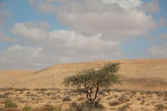 Loneley στην έρημο Στοκ φωτογραφία με δικαίωμα ελεύθερης χρήσης