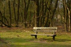Loneley bänk på skogkanten Royaltyfri Fotografi