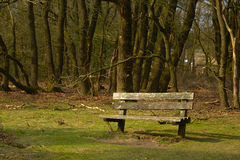 Lonely bench on the forest edge Royalty Free Stock Photography