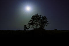 Loneley Tree. Tree in front of sun Royalty Free Stock Image