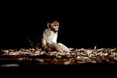 loneliness fotografia de stock royalty free
