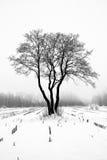 Loneliness. Lonely oak tree in a winter field Stock Images
