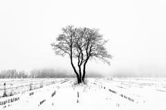 Loneliness. Lonely oak tree in a winter field Royalty Free Stock Photo