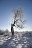 Loneliness. Old lonely tree. Loneliness and oblivion Royalty Free Stock Photo