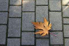 Loneliness. A lonely leaf fallen on the sidewalk Royalty Free Stock Images