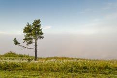 loneliness Fotografie Stock Libere da Diritti