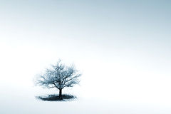 Loneliness. Lonely tree in winter scene stock photo
