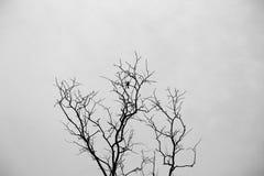loneliness Foto de Stock Royalty Free