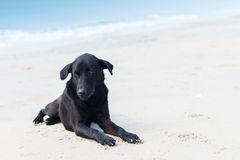 Loneliness dog on the beach Royalty Free Stock Photo