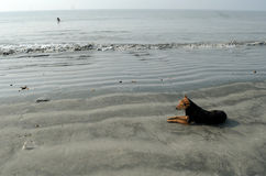 Loneliness. A dog taking rest on the sea beach of Ganga sagar Stock Photography